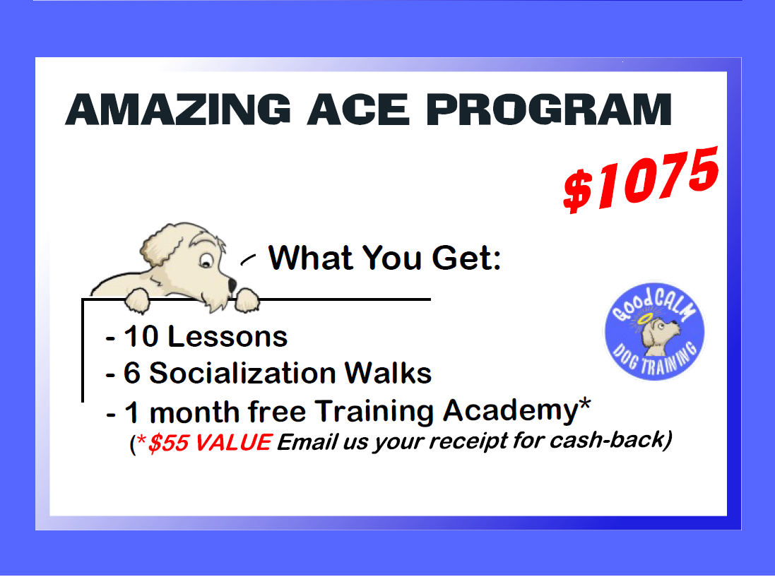 AMAZING ACE PRIVATE PROGRAM -What You Get
